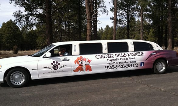 Dog Day Care In Flagstaff Az